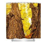 Maple Tree 3 Shower Curtain