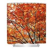 Maple Tree Foliage Shower Curtain