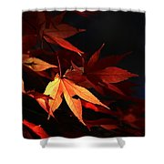 Maple Tree Leaves I Shower Curtain