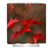 Maple Tree Leaves II Shower Curtain
