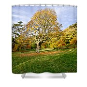 Maple Tree On The Slope. Shower Curtain