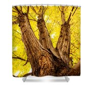 Maple Tree Portrait 2 Shower Curtain
