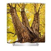 Maple Tree Portrait Shower Curtain