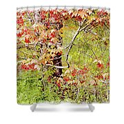 Maple Tree W C  Shower Curtain