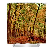 Maple Woods Trail 2 Shower Curtain