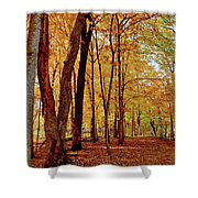 Maple Woods Trail 3 Shower Curtain
