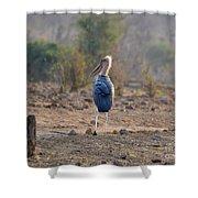 Marabou Stork Of Botswana Africa Shower Curtain