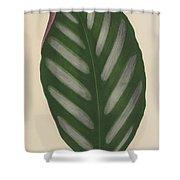 Maranta Porteana Shower Curtain