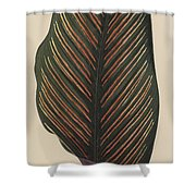 Maranta Regalis Shower Curtain