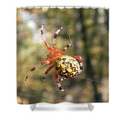 Marbled Orb Weaver Shower Curtain