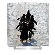 March Of Penguins Shower Curtain