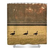 March Of The Geese Shower Curtain