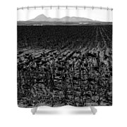 March Of The Sunflowers Shower Curtain
