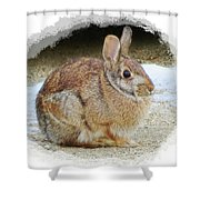March Rabbit With Vignette Shower Curtain