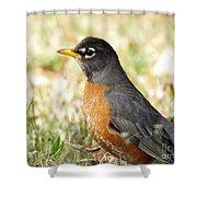 March Robin Shower Curtain