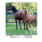 Mare And Colt Shower Curtain