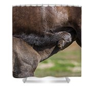 Mare And Foal, Icelandicelandic Shower Curtain