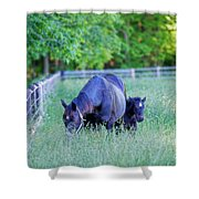 Mare And Foal In Shadows Shower Curtain