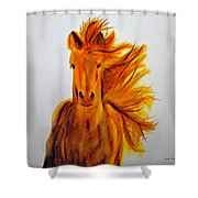 Mare In Motion Shower Curtain