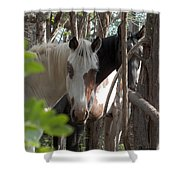 Mares In Trees Shower Curtain