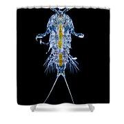 Marine Copepod, Lm Shower Curtain