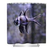 Marine Fish Shower Curtain