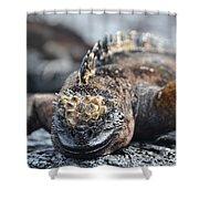 Marine Iguana  Shower Curtain