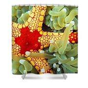 Marine Life, Close-up Shower Curtain