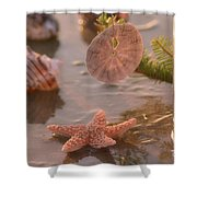 Marine Life Shower Curtain