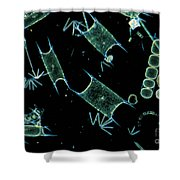 Marine Phytoplankton Shower Curtain