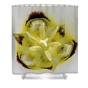 Mariposa Lily 3 Shower Curtain by Roger Snyder