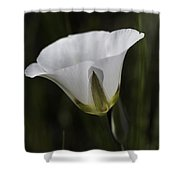 Mariposa Lily 6 Shower Curtain