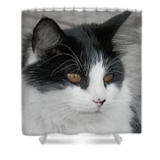 Marley Cat Meowning Shower Curtain