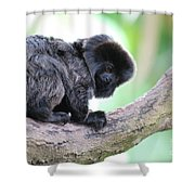 Marmoset Sitting Perched In A Tree Shower Curtain