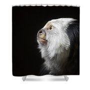 Marmoset Thoughts Shower Curtain by Stephanie Varner