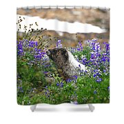 Marmot In The Wildflowers Shower Curtain