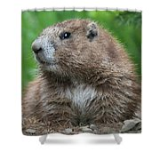 Marmot Shower Curtain