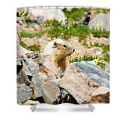 Marmot On Mount Massive Colorado Shower Curtain
