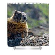 Marmot On The Ridge Shower Curtain