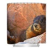 Marmot On The Rocks Shower Curtain