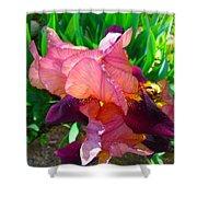 Maroon Iris Flower Shower Curtain