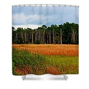 Marsh And Trees Shower Curtain