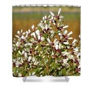 Marsh Blooms Shower Curtain
