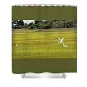 Marsh Egrets Shower Curtain