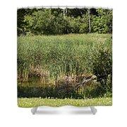 Marsh Grass Shower Curtain