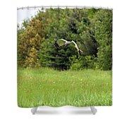 Marsh Hawk 2 Shower Curtain