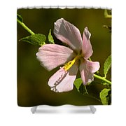 Marsh Mallow Shower Curtain