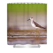 Marsh Sandpiper Tringa Stagnatilis Shower Curtain