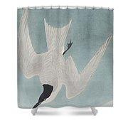 Marsh Tern Shower Curtain