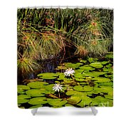 Marsh Waterlilies  Shower Curtain